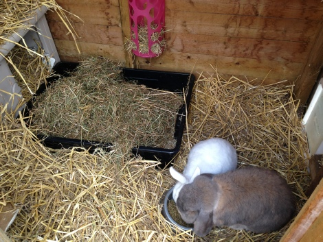 Best Bedding For Rabbits In Winter